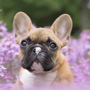 Kutya fotózás