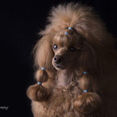 dog photography budapest